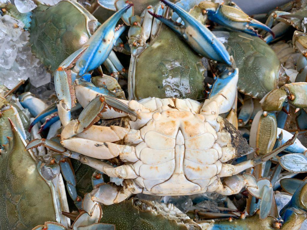Male Chesapeake Blue Crabs