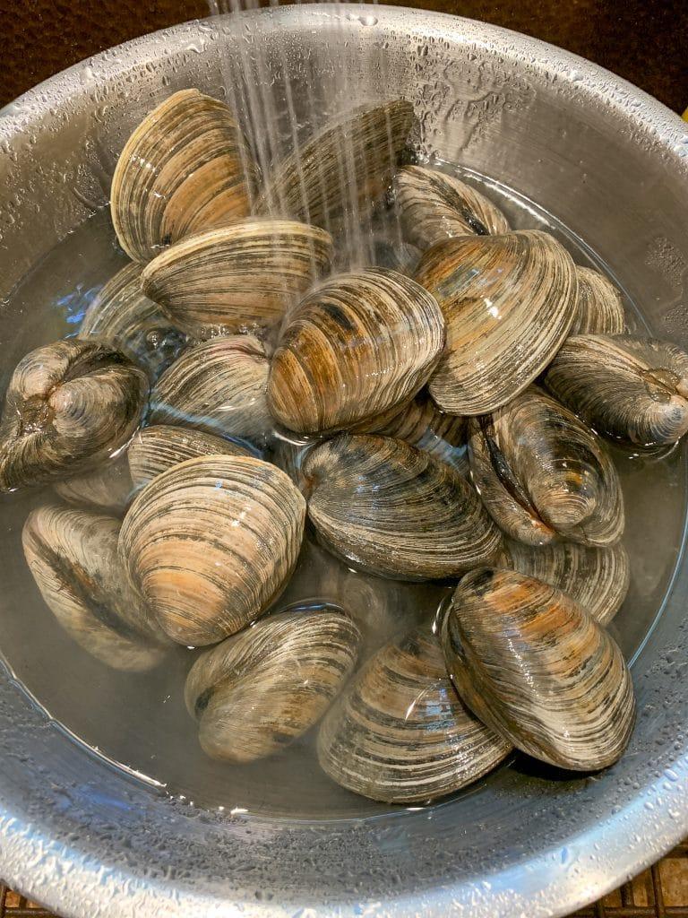purging cherrystone clams